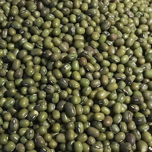 Haricots mungo issus de l'Agriculture Biologique