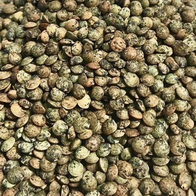 Lentilles vertes issues de l'Agriculture Biologique